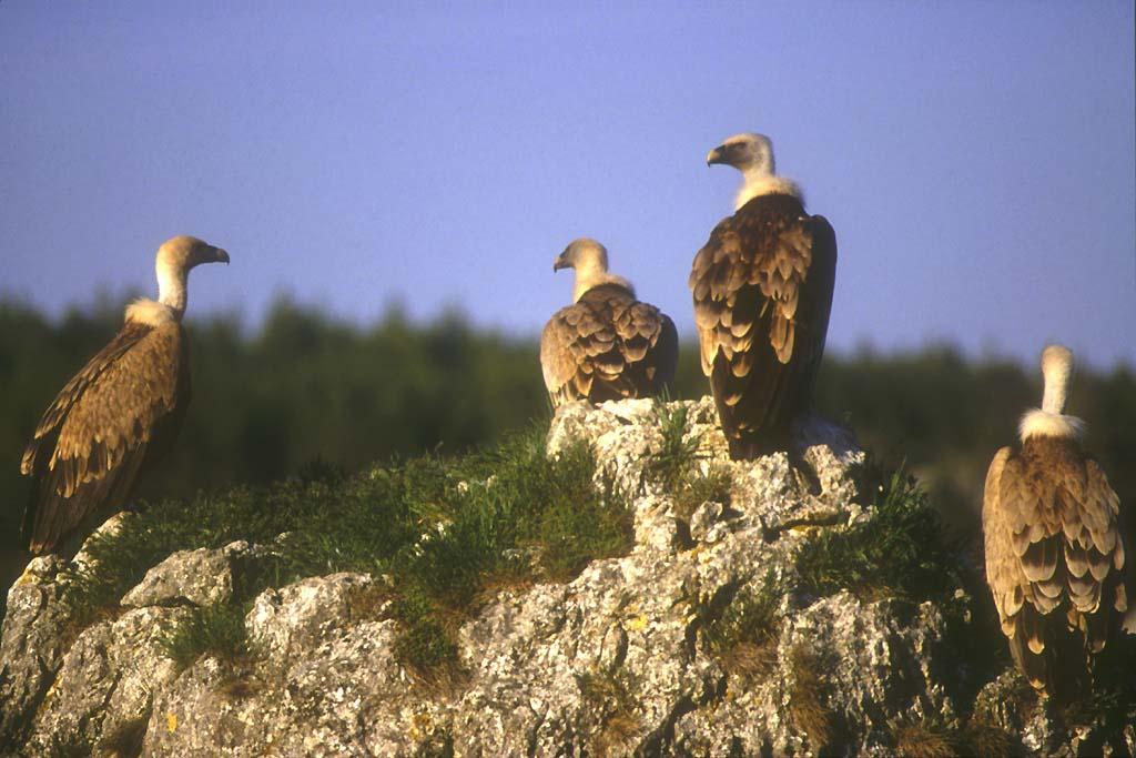Le belvedere des vautours